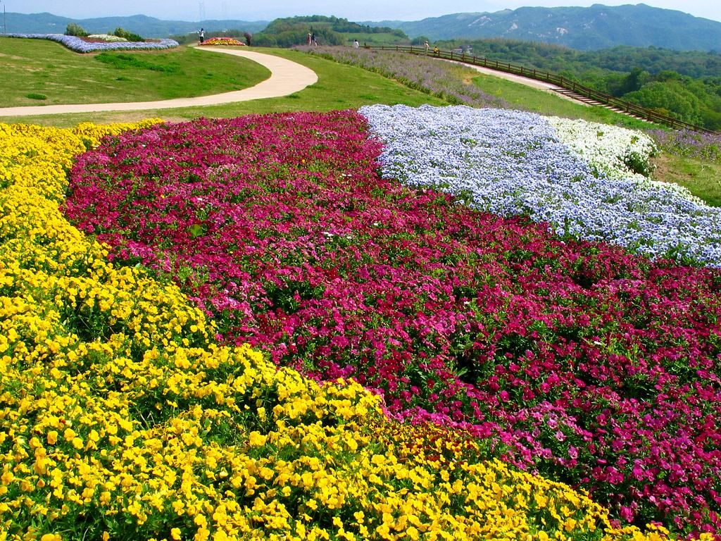 花の画像 p1_19