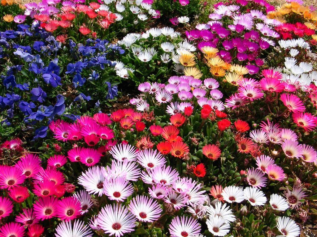 花の画像 p1_25