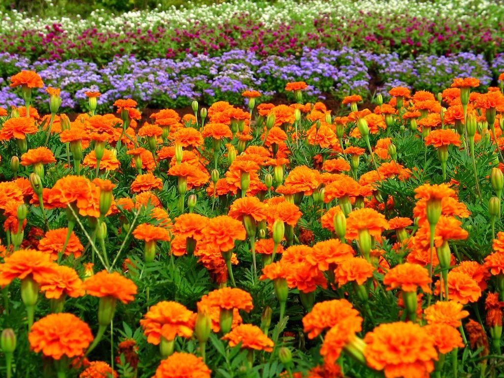 花の画像 p1_26