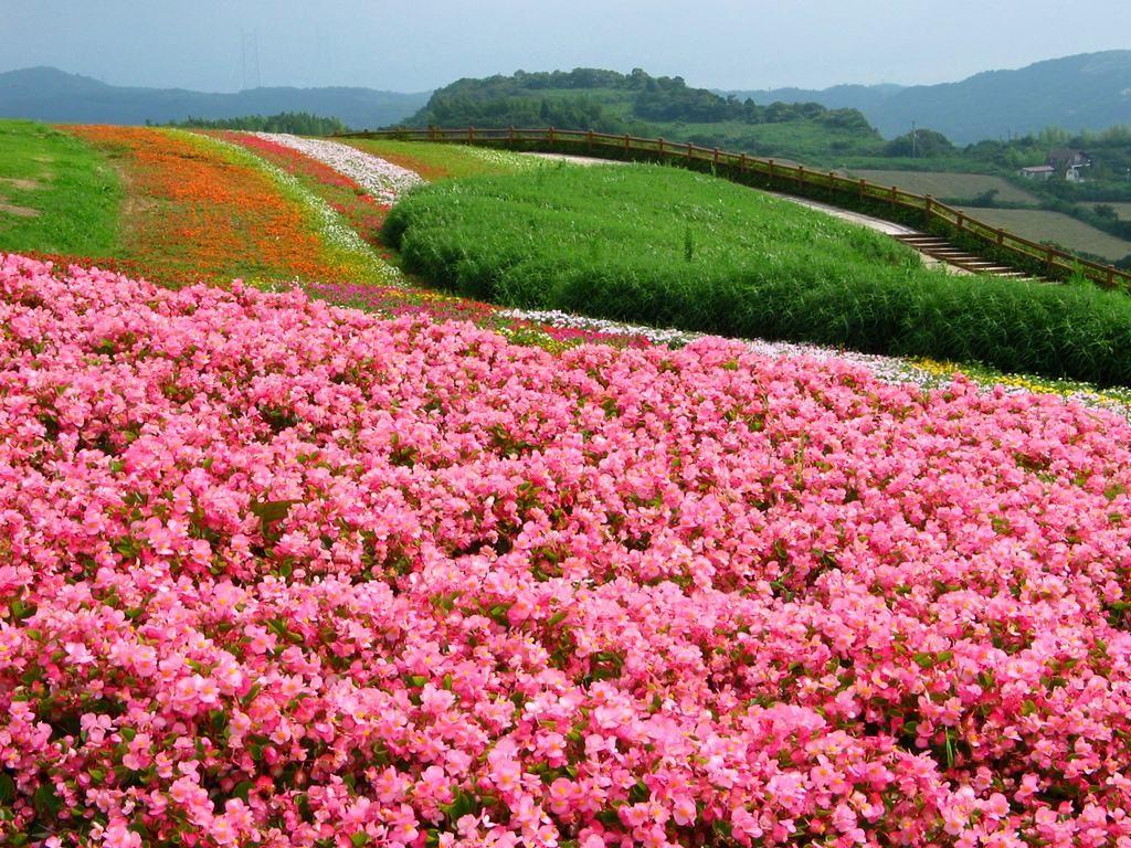 花の画像 p1_22