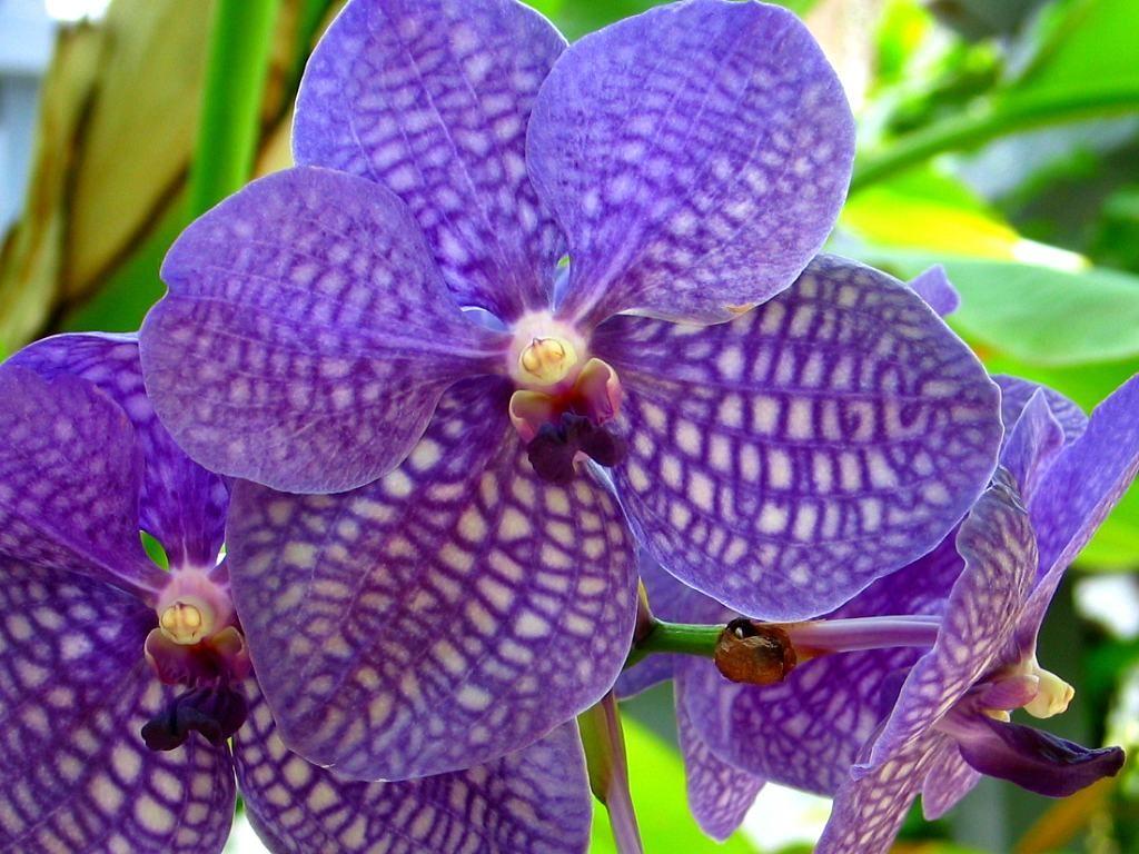 の植物と花・熱帯植物の花・花の庭園 奇跡の星植物