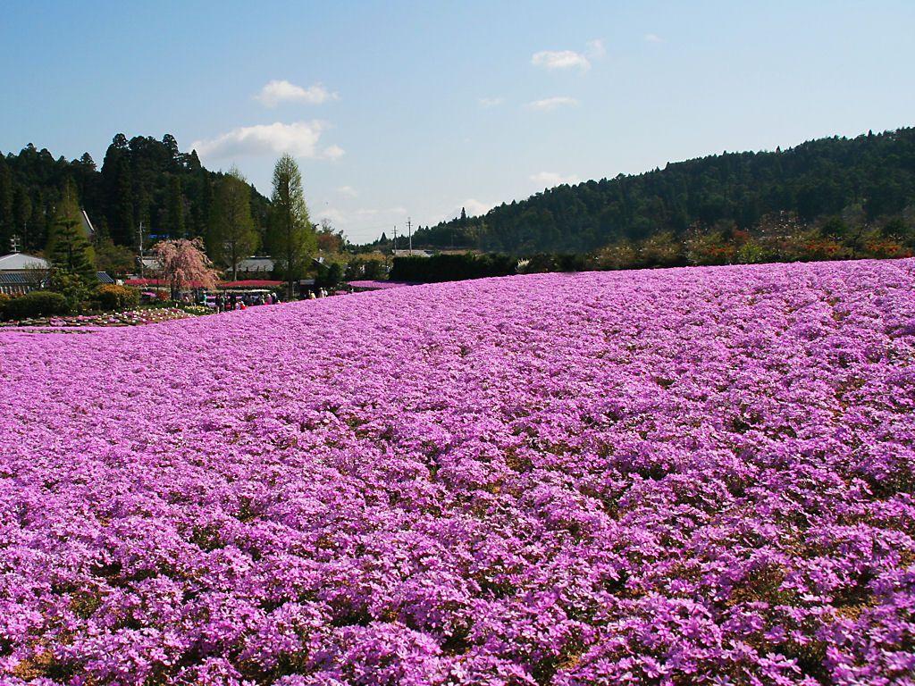 三田永沢寺の綺麗で美しい花畑