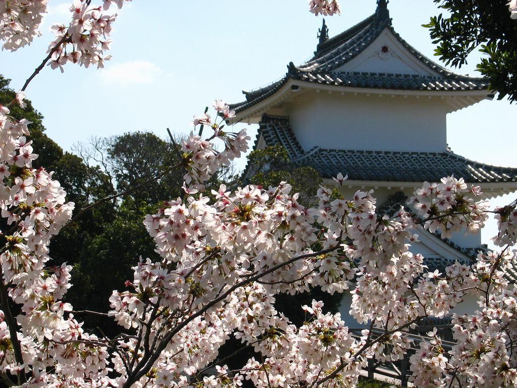 http://kobe.travel.coocan.jp/photo/higashiharima/akashikouen/sakura/sakura_015.jpg