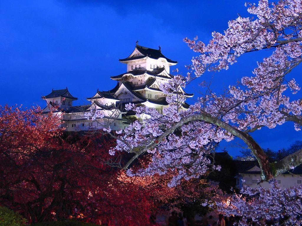 姫路城の夜桜 桜のライトアップ 壁紙写真集 無料写真素材