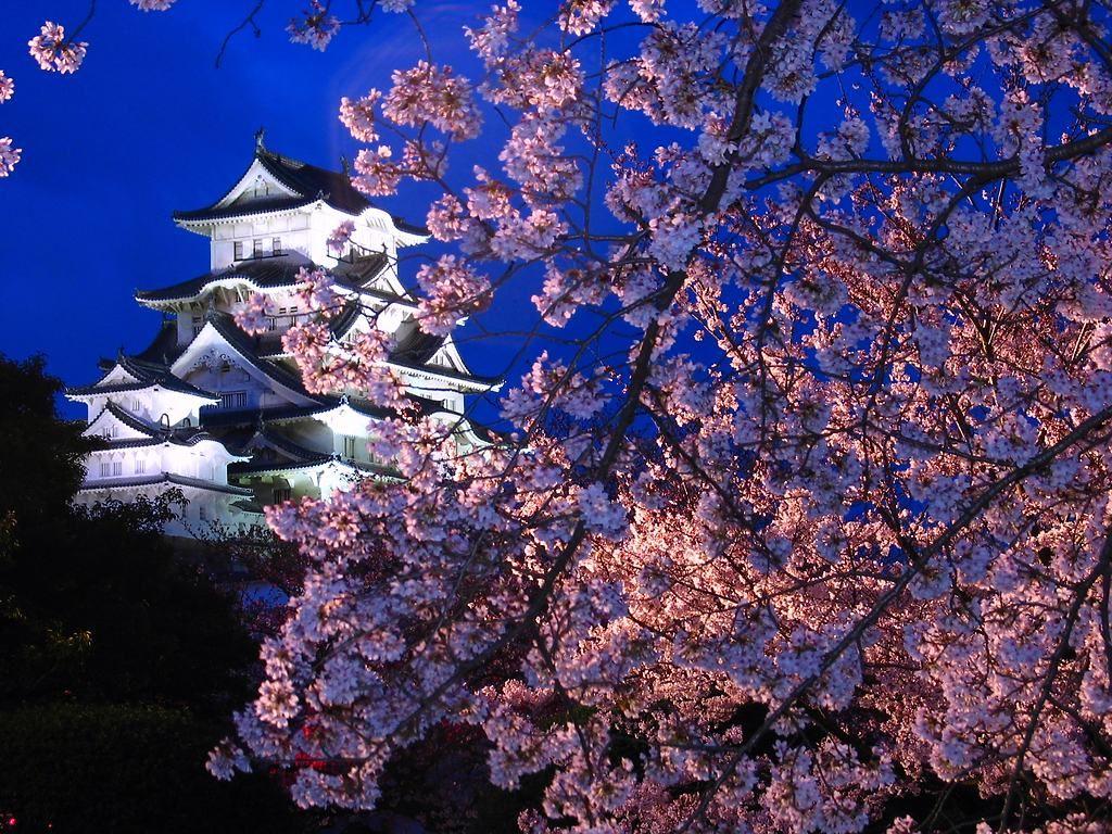 http://kobe.travel.coocan.jp/photo/nakaharima/himejijo/yozakura/sakura_003.jpg