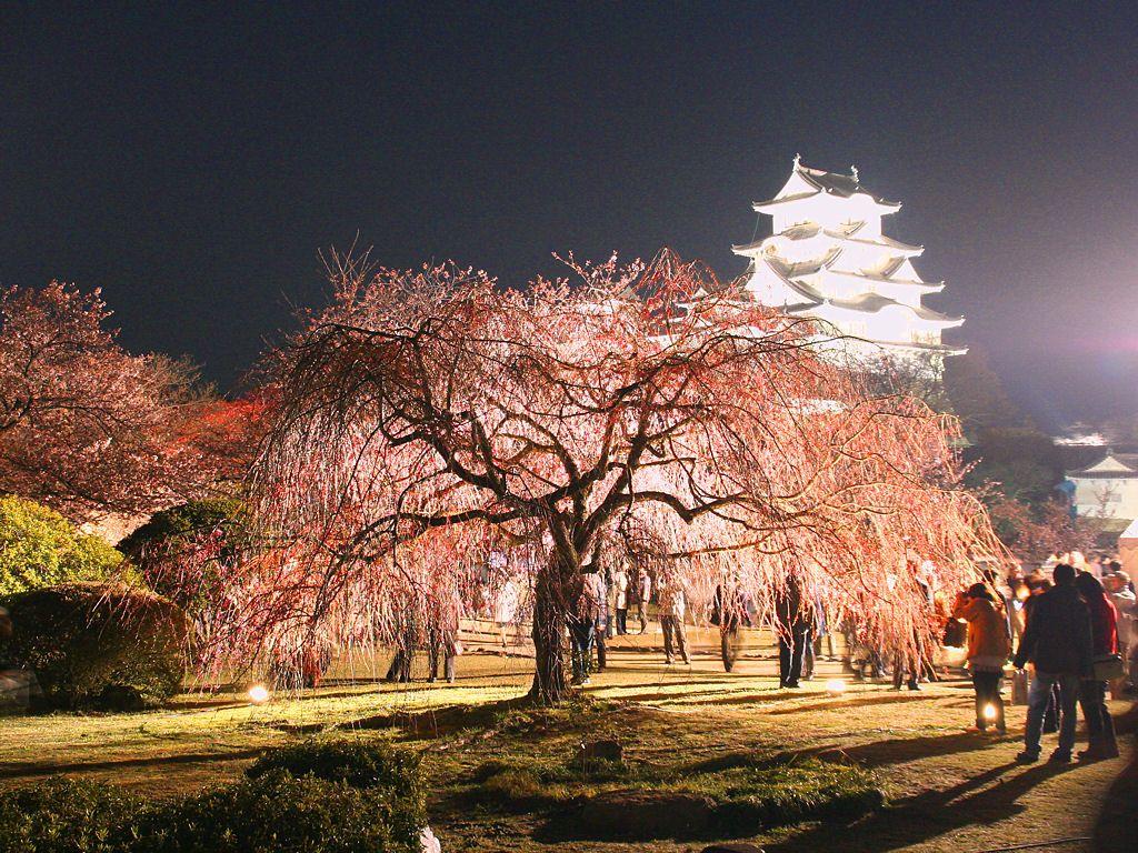 姫路城の画像 p1_32